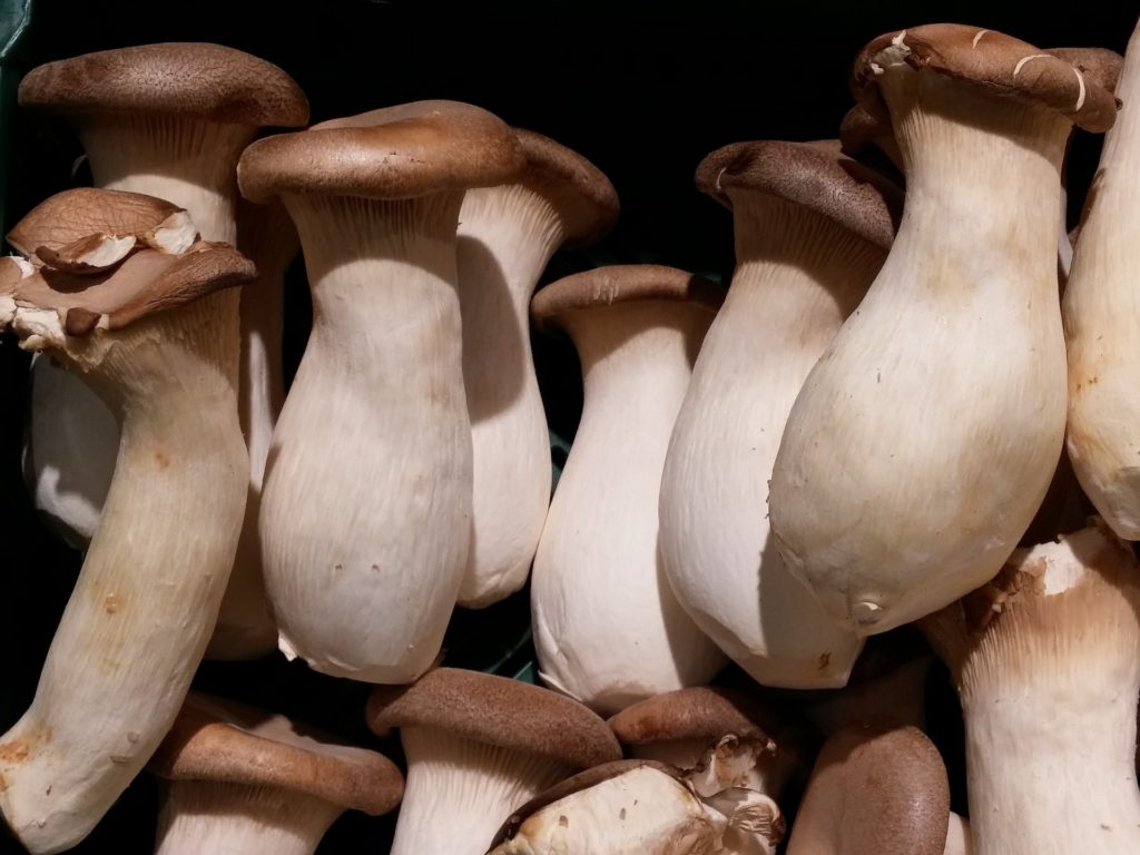 king oyster mushrooms - oyster mushrooms nutritional benefits