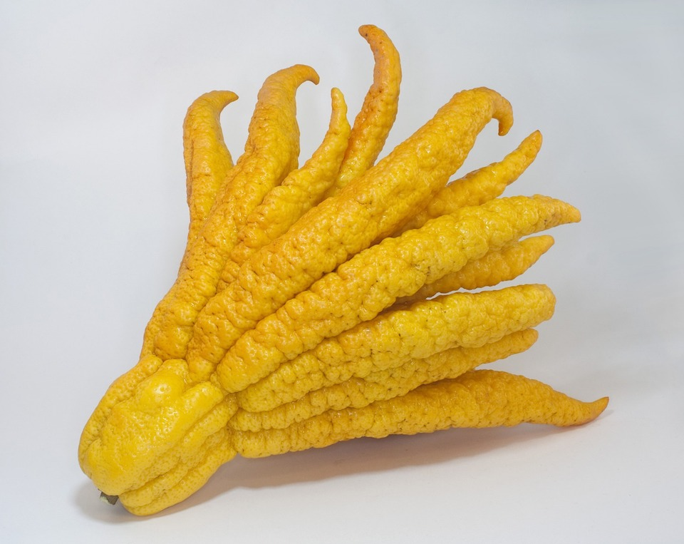 Buddha hand fruit health benefits