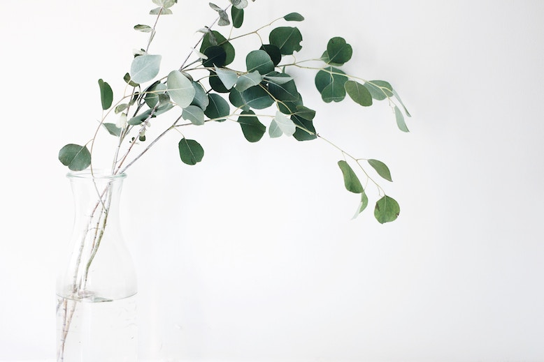 Picture of eucalyptus leaves in a vase