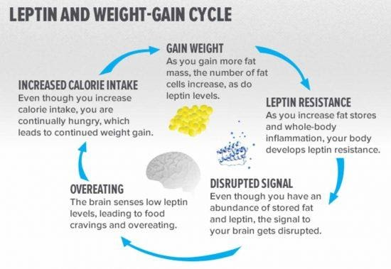 leptin-weight-gain-cycle
